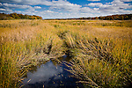 Autumn colors the cord grass at Quivet Creek in Dennis, Cape Cod, MA, USA