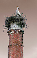 Storks have set up home on a variety of buildings in the nearby village to CasasNaAreia including this brick chimney