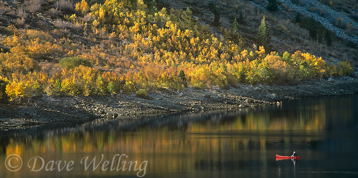 742900078 a fisherman guides his bright red canoe along tranquil lundy lake with a perfect reflection toward a shoreline ringed with golden aspens in fall color in the high desert of the eastern sierras in california panoramic image