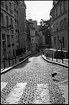 Pigeon landing on a street crossing, Paris, France