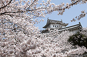 Apr. 06, 2010; Himeji, Japan - Springtime in Himeji. Cherry blossom trees surrounding Himeji Castle are in full bloom. Himeji Castle is the most visited castle in Japan and listed as a UNESCO World Heritage Site.