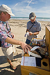 biologists, Gregg Doney and Mark Proster, preparing to collect fecal swabs and blood samples from a young peregrine falcon captured during the annual Padre Island Peregrine Falcon Survey, autumn, south Padre Island, Texas