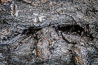 Deeply creased tree bark creates a miniature landscape of canyons, crevices and deep, dark caves.