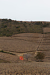 Pink house in winter Vineyard, on the Vermillion Coast, Pyrenees Orientales, France