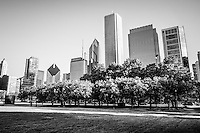 Picture of Grant Park and Chicago skyline with trees in front of  downtown city office buildings. Black and white photo is high resolution and was taken in 2010.