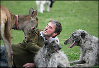 BNPS.co.uk (01202 558833)<br /> Pic: DavidFitzgerald/BNPS<br /> <br /> Kenny with roe deer Yanna and his two Irish wolfhound-deerhound cross' Murphy and Hennessy.<br /> <br /> Supplying farm animals to TV and film crews, including the huge hit series Game of Thrones, has saved Kenny Gracey's bacon.<br /> <br /> The 57-year-old farmer started supplying pigs, cows, donkeys, goats and even a trained deer to Hollywood seven years ago, when the recession was hitting his business hard.<br /> <br /> Mr Gracey said the film work his animals get has helped him pay the bills and keep his business going.<br /> <br /> Forthill Farm in Tandragee, Northern Ireland, specialises in traditional breeds like Longhorn cattle and Gloucestershire old spot pigs, ideal for shows and films set in medieval times.