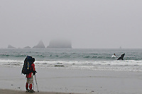Close encounters with a Grey Whale - Shi Shi Beach - Olympic National Park - Washington State