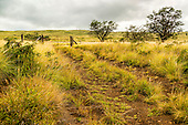 A backcountry scene along Mamalahoa Highway in South Kohala, Island of Hawai'i.
