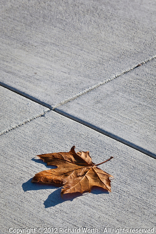 Nature's shapes, the irregular lines of a leaf, lie on the man-made geometry of straight and intersecting lines in concrete.  Each functional but different from the other.