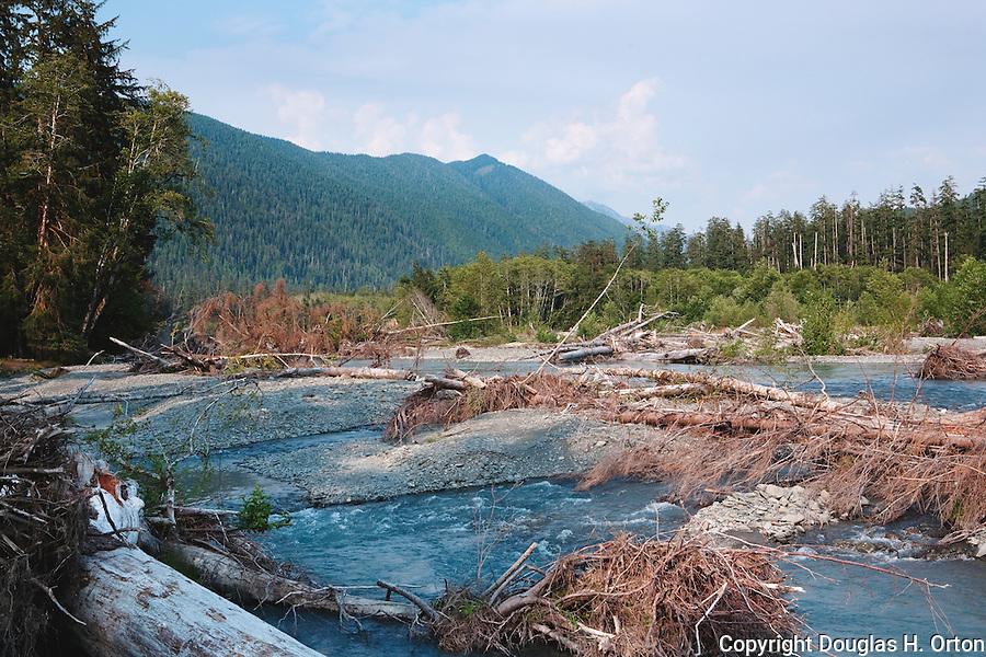 Fishing sekiu river for Hoh river fishing report