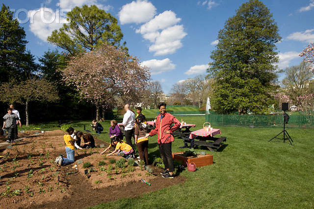 09 Apr 2009, Washington, DC, USA --- First lady Michelle Obama plants herbs in the White House Kitchen Garden with students from Bancroft Elementary School in Washington, Thursday, April 9, 2009, on the South Lawn of the White House in Washington.  --- Image by © Brooks Kraft/Corbis