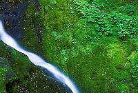 Waterfall, Klapatche Ridge, Mount Rainier National Park, Washington