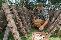 20130814 Andy Bojanowski from Middlebury's Eddy Farm Cultivates Shitake Mushrooms.