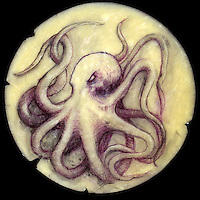 Mixed media, drawing of a cephalopod on synthetic clay as a homage to Kuthulu.