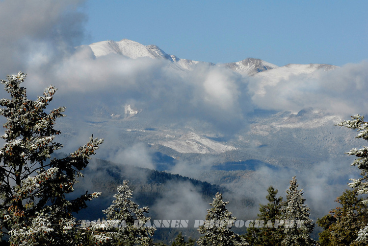 Low clouds, Mt. Evans, snowy spruce