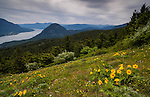 The Columbia River and surrounding landscape is seen from the Dog Mountain Trail in Washington State.