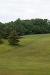 Sheep grazing on a hillside in summer, northwestern Michigan, MI, near Petoskey, USA