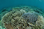 Tropical coral reefs in the Coral Triangle.