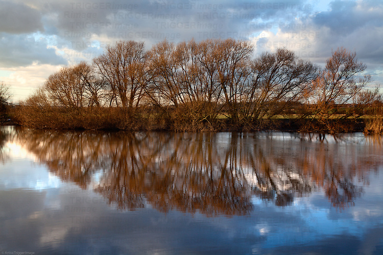 Winter Trees Reflected in the River Aire Knottingley West Yorkshire England