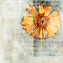 Pressed Flower in a Mixed Medium art background with Sanskrit etching.