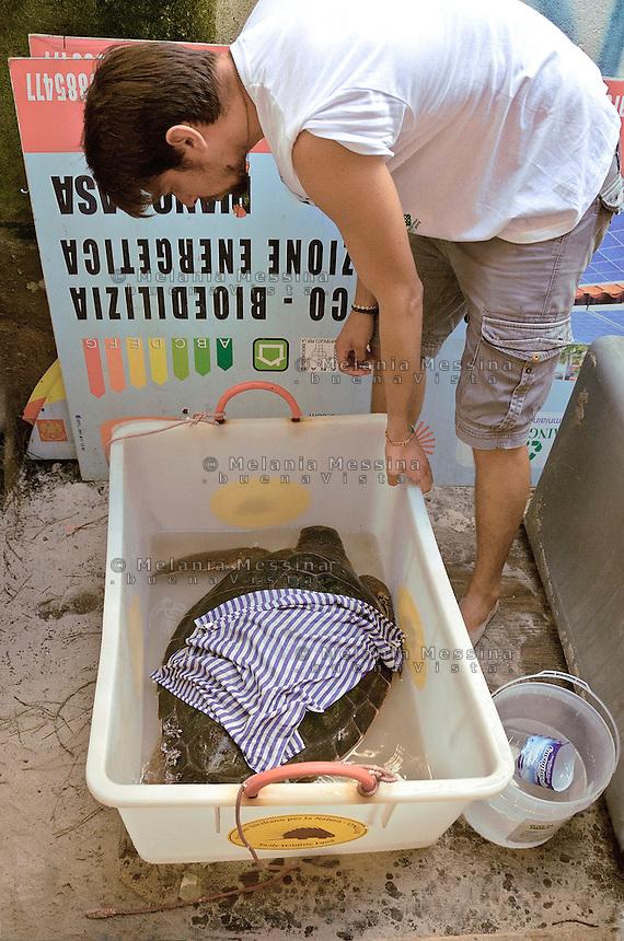 Un volontario del WWF si occupa di una tartaruga caretta caretta trovata ferita nel mar Mediterraneo.<br /> A volunteer of the WWF takes care of an injured loggerhead turtle found  in the Mediterranean Sea.