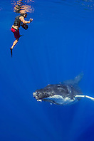 Underwater videographer and humpback whale, Megaptera novaeangliae, Hawaii, Pacific Ocean