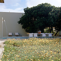 The swimming pool is surrounded by untreated decking which will weather with age and the foreground is planted with a groundcover of yellow arctotis