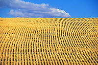 freshly harvested wheat field Oregon