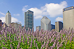 Chicago skyline behind beautiful flowers in Millennium Park, Chicago, Illinois
