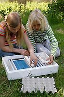Kinder wollen Hühnereier in einer Brutmaschine ausbrüten, Hühnerei, Eier, Ei, die Eier werden in die Brutmaschine einsortiert