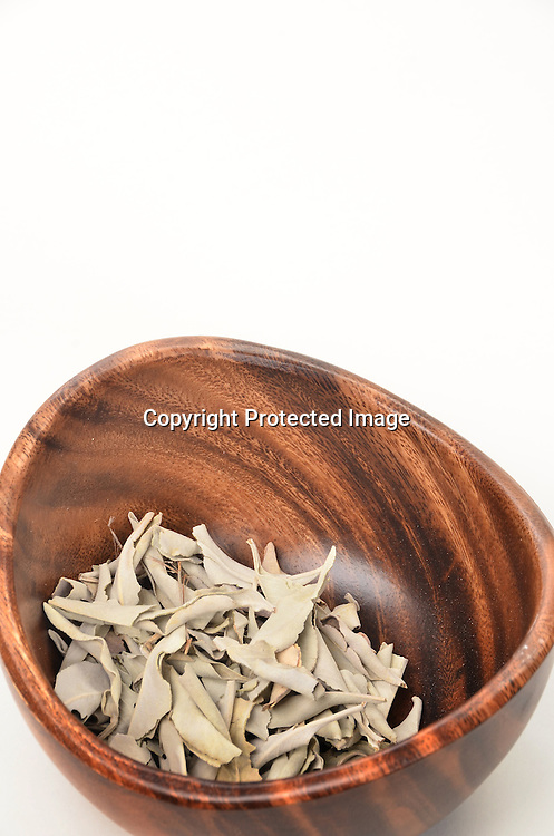 Stock Photo of Dried Eucalyptus Leaves
