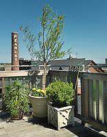 The gate to the roof terrace is flanked by a small tree and a collection of plants in a variety of containers