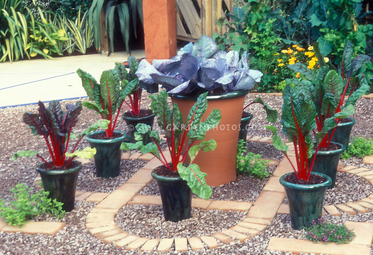 Chard and cabbage vegetables growing in container pots on stone and brick patio garden for an edible container garden