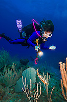 23 July 2015: SCUBA Diver Sally Herschorn finds a reef squid (Sepioteuthis sepioidea) hovering at Main Street, on the North Shore of Grand Cayman Island. Located in the British West Indies in the Caribbean, the Cayman Islands are renowned for excellent scuba diving, snorkeling, beaches and banking.  Mandatory Credit: Ed Wolfstein Photo *** RAW (NEF) Image File Available ***