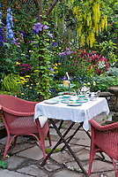 Eating outdoors with wicker chairs, tea set, lush garden, stone patio, coffee cups, luncheon outside on the stone patio with hanging clematis vines, delphinium flowers, achillea, rattan chairs for a colorful private setting, yellow flowering tree in spring Laburnum waterei 'Vossii'