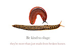 Be kind to slugs; they're more than just snails from broken homes