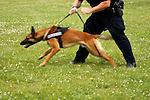 Stock Law Enforcement Images