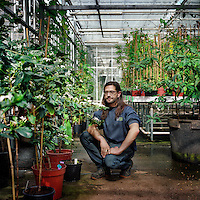 Spanish botanist Carlos Magdalena kneels in a glasshouse at the Royal Botanical Gardens, Kew in London. He has helped to grow a critically endangered species of Ramosmania in the garden at Kew.