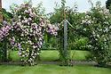Rose Pergola, Upton Grey, mid July. Climbing roses are pink Rosa 'Blush Rambler' and white Rosa 'The Garland'.