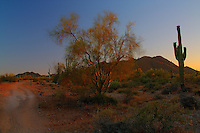 Desert colors in the sunset at San Tan Regional Park