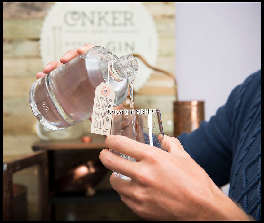 BNPS.co.uk (01202 558833)<br /> Pic: LauraDale/BNPS<br /> <br /> Pouring a glass of Batch 38 Conker Spirit gin in Rupert's distillery, set up in his home's study.<br /> <br /> A canny entrepreneur has launched Britain's smallest commercial gin distillery - after setting it up in the confines of his own kitchen.<br /> <br /> Rupert Holloway packed in his high-flying job as a chartered surveyor to start producing the trendy spirit one bottle at a time at his home in Christchurch, Dorset.<br /> <br /> His miniature distillery is the first ever to open in the county - and his unique recipe uses botanicals found in the hedgerows, forests and coastline of the county.<br /> <br /> He experimented with 37 recipes before settling on one made with gorse flowers and elderberriers hand-picked from the New Forest, and samphire, a sea vegetable, from the sea shore.<br /> <br /> The gin, called Conker Spirit, will be launched in time for Christmas and it is expected to sell for &pound;30 a bottle.