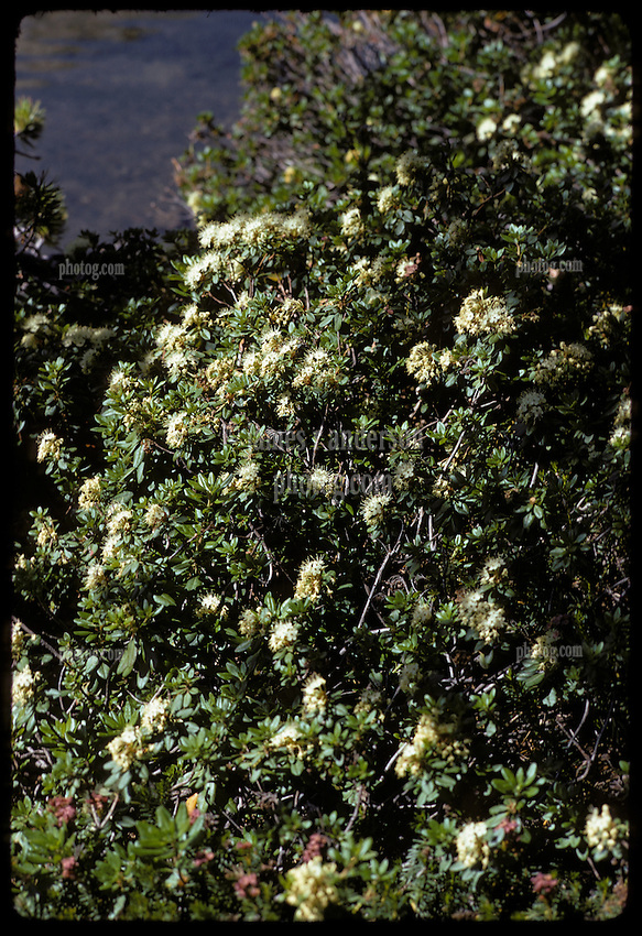 White wildflowers in the morning, Young Lakes, Yosemite National Park. View shot on Kodachrome II, Nikon Ftn camera, 60th f8 105mm f/2.5 Nikkor Lens, 1 August 1973