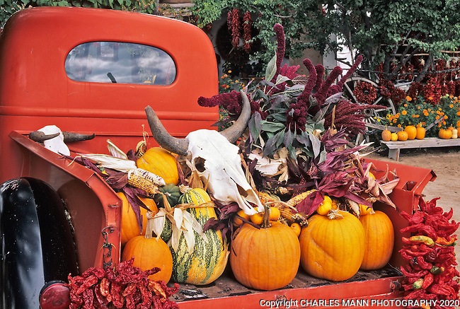 An old pickup truck filled with September produce and a skull makes a colorful autumn scene  at a fruit stand near the village of Velarde in northern New Mexico.