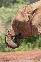 David Sheldrick aWildlife Trust-Kenya