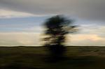 Tree Blur From Amtrak