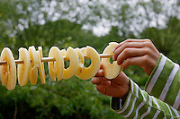 Kinder basteln sich einen Apfeltrockner, Kind hängt Apfelscheiben auf Trocknungsstange, Apfel, Äpfel, Äpfel trocknen, Trockenobst, Apfelringe, apple, apples