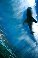Vancouver aquarium. En route to the 2010 Winter Olympics, Vancouver, British Colombia, Canada.