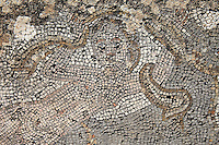 Roman mosaic of a nereide or sea nymph, being pulled along by a seahorse, from the House of the Nereides, Volubilis, Northern Morocco. Volubilis was founded in the 3rd century BC by the Phoenicians and was a Roman settlement from the 1st century AD. Volubilis was a thriving Roman olive growing town until 280 AD and was settled until the 11th century. The buildings were largely destroyed by an earthquake in the 18th century and have since been excavated and partly restored. Volubilis was listed as a UNESCO World Heritage Site in 1997. Picture by Manuel Cohen