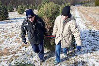 Two Teenagers carry a Christmas Tree.