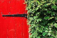 Red garden door with ivy wall.